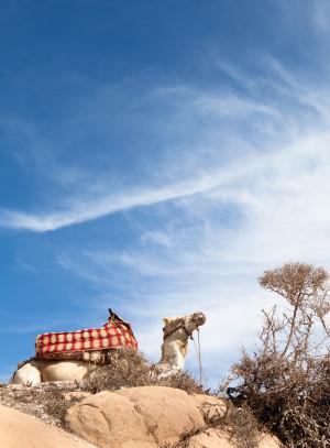 Camel sun blue sky morocco travel