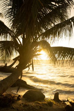 Golden sunset behind palm tree nicaragua caribbean ocean