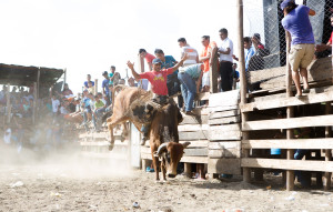 Travel photography of bull rider at rodeo in Nicaragua