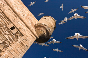 Seagulls fly near ocean in travel photograph