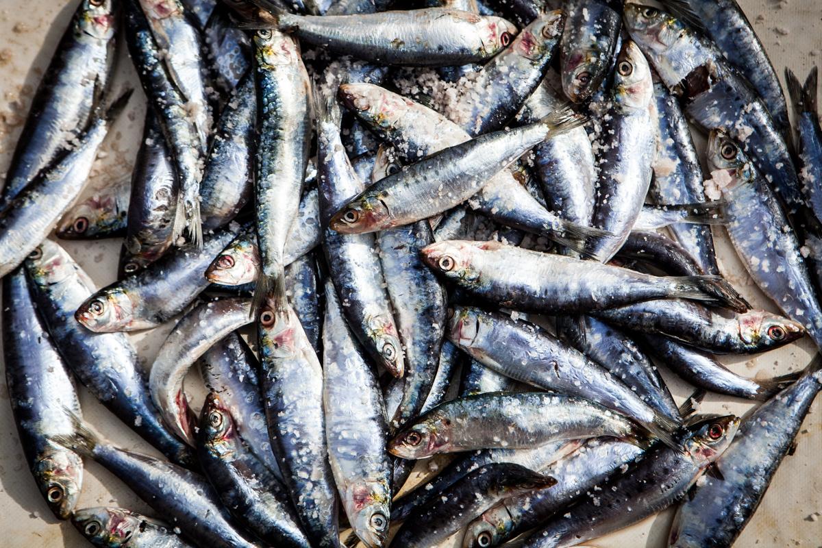 food-detail-photo-fresh-fish