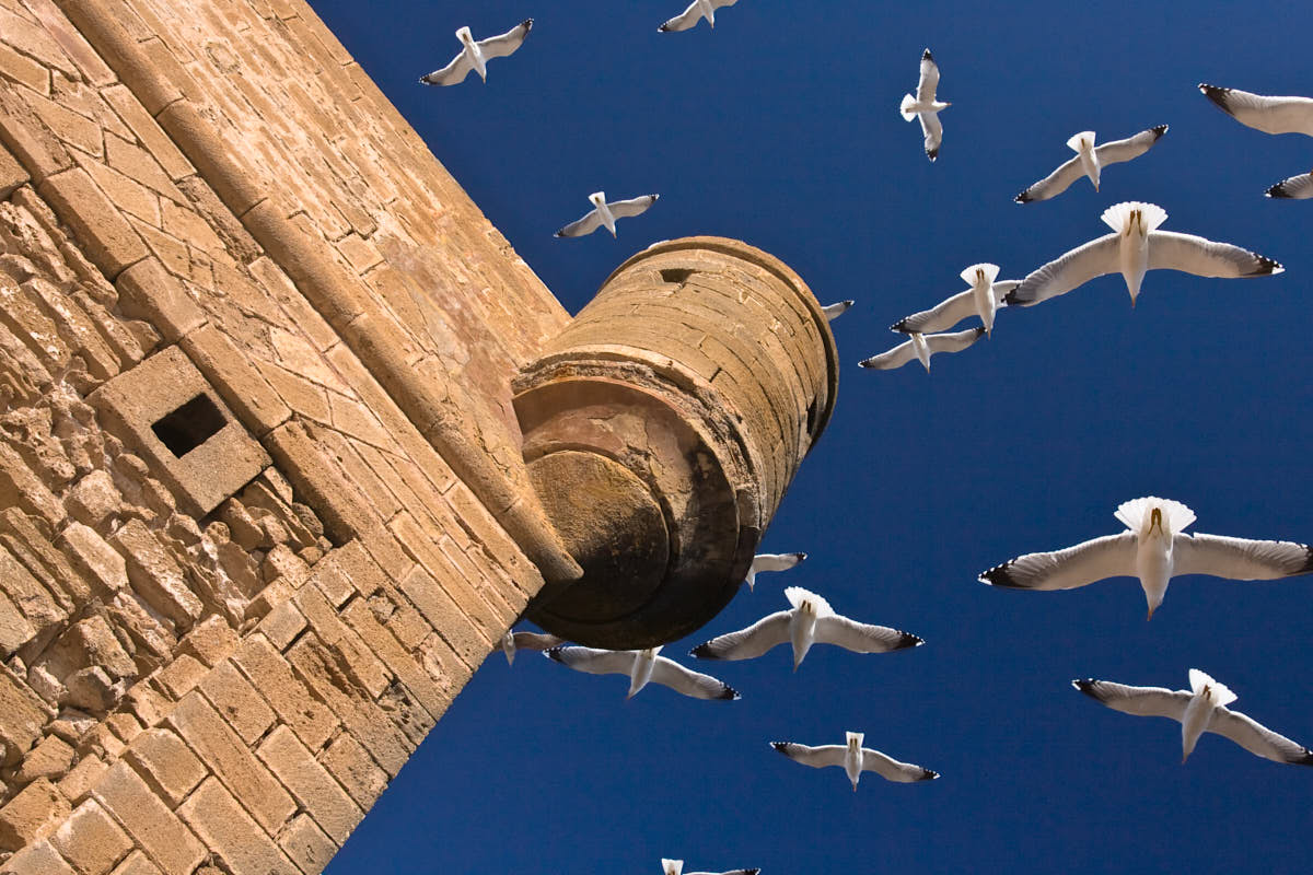 Seagulls_Blue_Sky_Travel