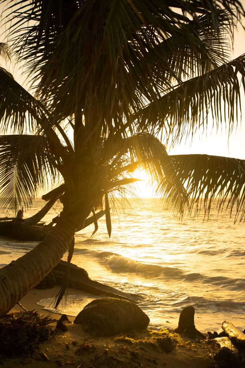 Tropical_Palm_Tree_Golden_Sunset