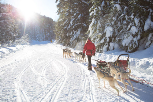 Dogsled_Pack_Whistler_Canada_winter_snow